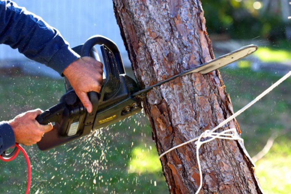 """Risultato immagini per alberi tagli"""""""